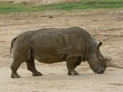 wild_animal_park.JPG