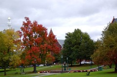 burlington-foliage.jpg