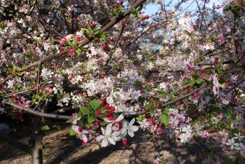 la-canada-garden2.JPG
