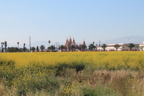 chinohills-flowers2.JPG