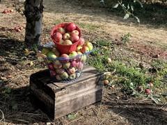 apple-los-rio.jpg