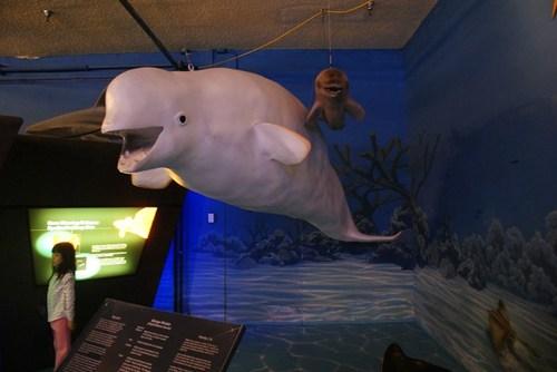natural-history-museum05.jpg