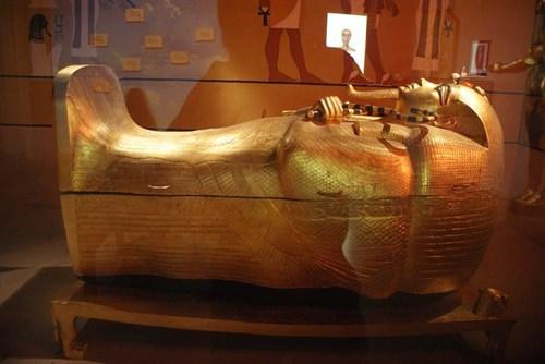 natural-history-museum09.jpg