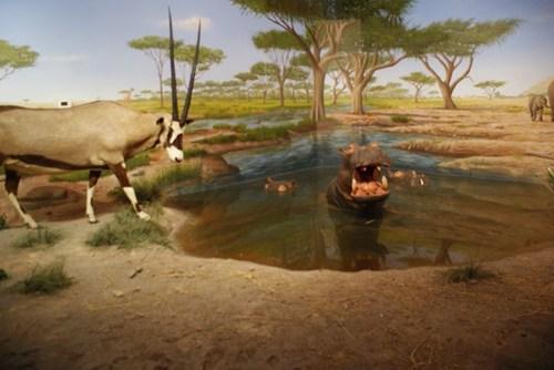 natural-history-museum18.jpg
